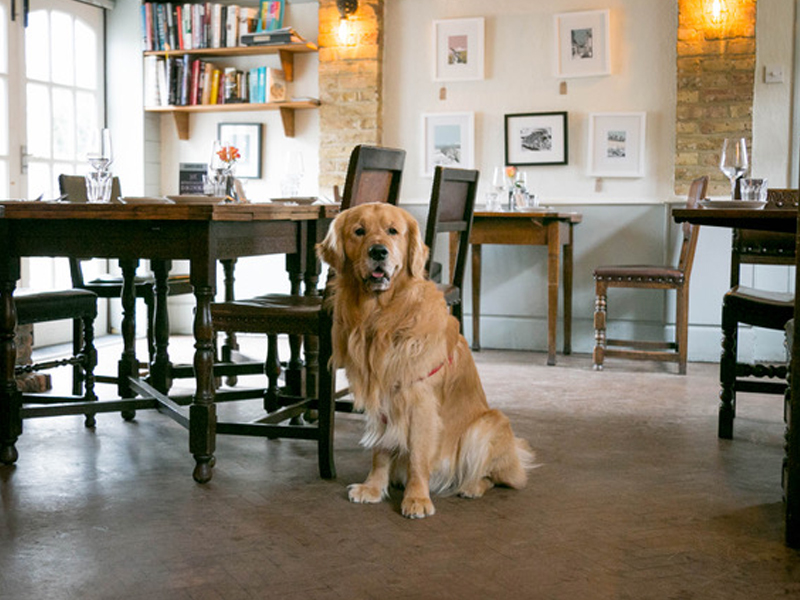 Corner House Minster - Dog Friendly Restaurant in Kent